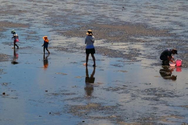 2021 白石 海岸 マテ 貝